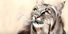 Ghost (Bobcat), an art print by Peyton Aufill Texas Animals, Predator, Big Cats, All Art, Wildlife, Sketches, Art Prints, Canvas, Gallery