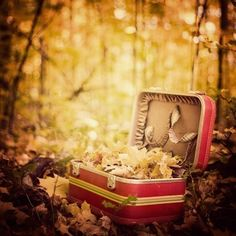 autumn leaves in pink luggage