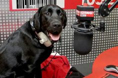 LISTEN: The only radio show in the world hosted by a dog! https://audioboo.fm/boos/1276796-kerrang-rock-dog-1st-show-highlights