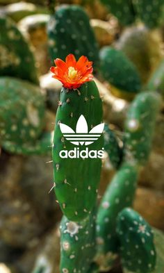 adidas wallpaper by - 94 - Free on ZEDGE™ Puma Wallpaper, Adidas Iphone Wallpaper, Tumblr Wallpaper, Cool Wallpaper, Dope Wallpapers, Aesthetic Wallpapers, Wallpaper Collection, Diamond Wallpaper, Make Up Your Mind