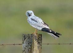 Beautiful Birds, Animals Beautiful, Crazy Bird, Kinds Of Birds, All Nature, Little Birds, Birds Of Prey, Raptors, Bird Feathers