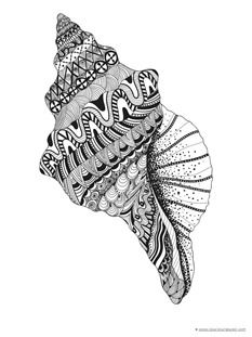 Seashell Coloring Pages - 1 1 Doodle Art Drawing, Zentangle Drawings, Mandala Drawing, Zentangles, Mandala Art Lesson, Mandala Artwork, Zantangle Art, Doodle Art Designs, Madhubani Art