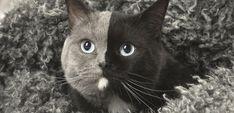 В сети показали фото уникального «двуликого» кота