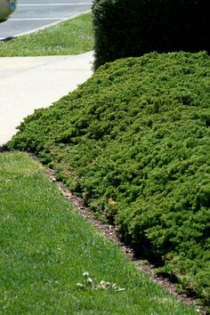 Landscaping Steep Slopes | Creeping juniper is manageable enough to grow in the front yard. It's ...