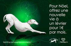 How to help #greyhounds    Cómo ayudar a los #galgos    1€/mois  https://www.teaming.net/sosgalgosasociacion