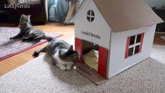 Stella's New DIY Cardboard Cat House