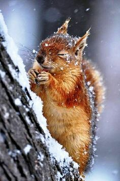 A Cute Squirrel In The Eye of Snow Storm !
