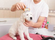 Regularly grooming your dog is a great way to keep him healthy. It helps to remove dead hair flakes of dry skin dirt and debris from his coat. Grooming your small dog involves more than keeping his coat clean and well trimmed. Dog Grooming Tools, Dog Grooming Clippers, Dog Grooming Business, Cat Grooming, Poodle Grooming, Pet Shop, Fox Red Labrador, Dog Haircuts, Dog Smells
