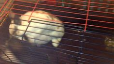 Funny video with Rabbits Mating Threesome Stile