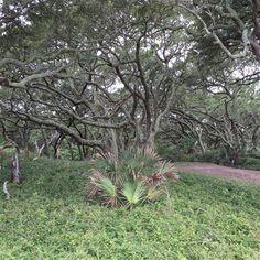 Jekyll Island Trail