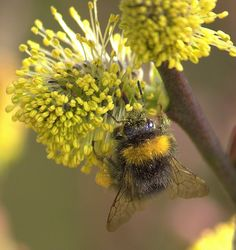 Busy Bee by Chrissie28IWish!, via Flickr