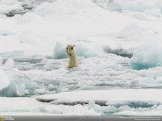 Arctic Hi-Five, Svalbard, Nature Category