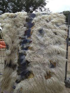 herders van balloo