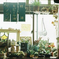 Japanese in-house garden