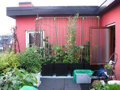 Rooftop Vegetable Garden 2010 by jdaoust75, via Flickr