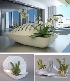Dry the dishes & Water the plants