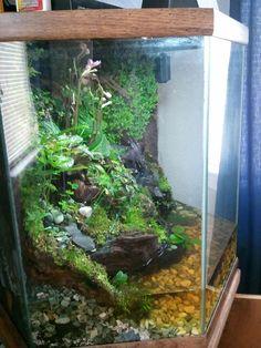 Click the image to open in full size. Frog Habitat, Reptile Habitat, Reptile House, Reptile Room, Reptile Cage, Fish Tank Terrarium, Aquarium Terrarium, Planted Aquarium, Aquarium Fish