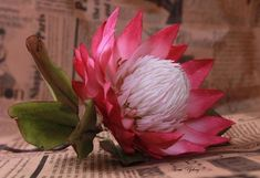 protea by Elena Ujshag Protea Art, Protea Flower, Macro Flower, Flower Art, Flower Ideas, Ceramic Flowers, Clay Flowers, Fondant Flowers, Icing Flowers