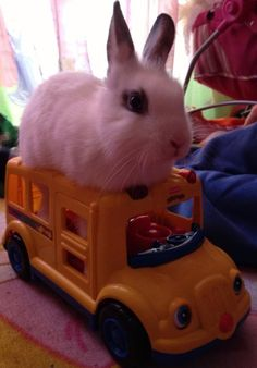 Bunny on the bus!