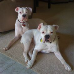 white boxers are the best!