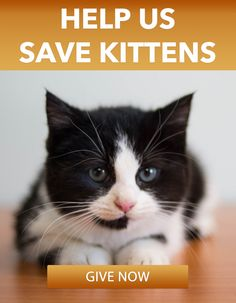 Help us save kittens. Give today.
