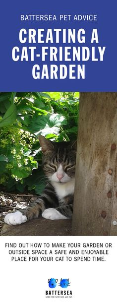 This guidance will help you make your garden or outside space cat-friendly and enriching for your feline friend. Clever Animals, Cute Animals, Diy Cat Enclosure, Cat Friendly Plants, Diy Cat Tree, Cat Playground, Cat Garden, Outdoor Cats, Space Cat