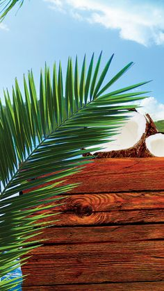 Ipad Air 2 Wallpaper, Fir Tree, Beautiful Stories, Ceviche, Text Color, Plant Leaves, Abstract Art, Coconut, Marketing