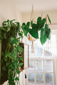 A Charming Bohemian Home in West Palm Beach, FL – Design*Sponge Bohemian House, Bohemian Decor, Bohemian Furniture, Beach Design, Interior Stylist, West Palm Beach, Finding A House, Hanging Planters, Beach Cottages
