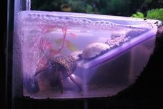 (link) DIY How to Build Land Hermit Crab Pools by ~GodzillaHermitCrab on deviantART ~ for more great PINs w/good links visit @djohnisee ~ have fun!