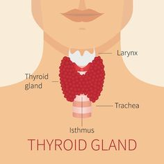 Thyroid surgery is used to treat thyroid nodules, thyroid cancer, hypothyroidism, & hyperthyroidism. Rely on the experts at CEENTA to treat your thyroid problems you may have. Thyroid Diet, Thyroid Issues, Thyroid Gland, Thyroid Hormone, Thyroid Disease, Thyroid Problems, Thyroid Nodules Surgery, Thyroid Health, Women's Health