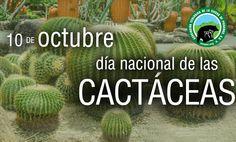 Día Nacional de la Cactáceas