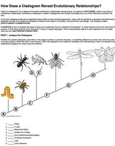 cladogram worksheet answer key bio unit 11 classification pinterest. Black Bedroom Furniture Sets. Home Design Ideas