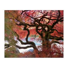 Autumn Japanese Maple Floral Acrylic Wall Art - photography gifts diy custom unique special