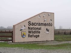 Sacramento National Wildlife Refuge | In addition to birding backroads along farms and ranches, I visited a ...