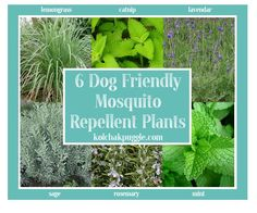 Help keep bugs at bay with the 6 dog-friendly mosquito repellent plants and our other handy tips.