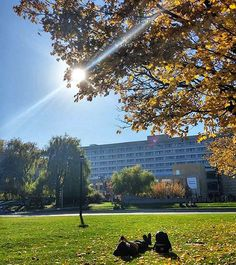 Perfect way to soak up the sun! Photo credit and thanks to community member Sun Photo, York University, School Photography, Autumn, Fall, Photo Credit, Thankful, Community, Instagram Posts