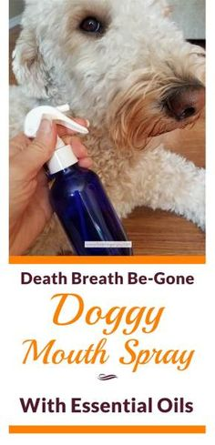Death Breath Be-Gone Doggy Mouth Spray with Essential Oils   Feasting On Joy