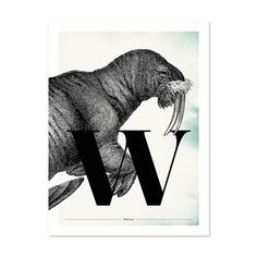 Buchstabe W wie Walross - ein & alles Wandkunst für Kinder Superhero, Fictional Characters, Letter W, Great Gifts, Animals, Kids, Nice Asses