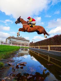 Sport Of Kings, Thoroughbred, Horse Racing, Horses, River, Sports, Animales, Fotografia, Hs Sports