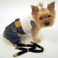 Pants Pattern - Fonzie Blue Jeans - DIY Dog Clothes - Craftfoxes