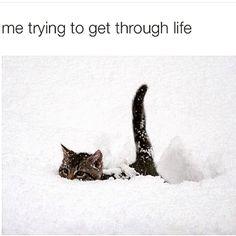 #strugglestreet #pussmeow #burried #stresslife