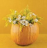 3 ways to use pumpkins as decorations. #video #fall #pumpkin