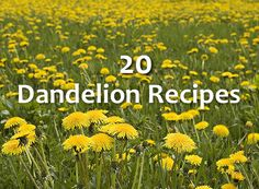 20 Amazing Dandelion Recipes...http://homestead-and-survival.com/20-amazing-dandelion-recipes/