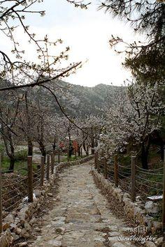 Ehden, North Lebanon