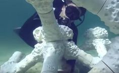 Jacques Cousteau's Grandson Hopes 3D Printing Can Save Carribean Coral Reefs | Care2 Causes