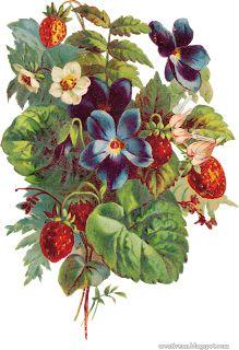 Картинки старинные ягоды. Клипарты ягоды.