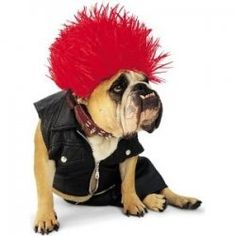 Your dog can wear one of these great puppy costumes for this Halloween Night! Here you'll find costumes for big dogs and even dog costumes for...
