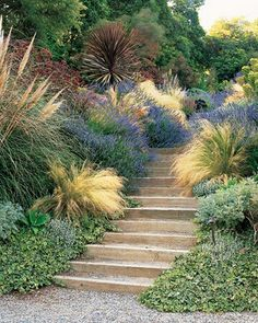 The first rule of stair-side plants: What grows by your feet gets extra attention. The etched leaves of Hedera helix 'Needlepoint,' the gold-plumed Stipa tenuissima, and Lavandula 'Grosso,' which releases its scent when rubbed, all reward close scrutiny. Hillside Garden, Garden Paths, Sloped Garden, Herb Garden, Garden Beds, Garden Stairs, Ornamental Grasses, Dream Garden, Backyard Landscaping