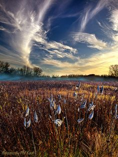 Milkweed | Flickr - Photo Sharing!