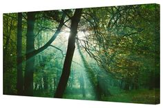 Canvart premium #canvasprint Sun Rays In The Forest Giclee Gallery Wrap Canvas. Buy now at http://canvart.co.uk/sun-rays-in-the-forest-giclee-gallery-wrap-canvas.html